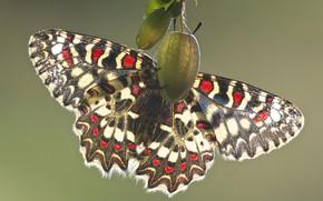 Картинка макро, свет, бабочки, насекомые, природа, зеленый, фон, узор, бабочка, растение, насекомое, крылышки, разноцветная, яркая, узорчатая, …