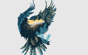 Картинка птица, природа, сокол, арт, фон, крылья