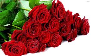 Картинка иней, букет, красные розы