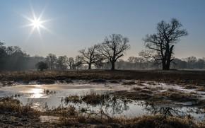 Картинка поле, свет, природа, туман, утро
