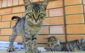 Картинка кошка, кот, котята