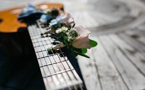 Картинка цветы, гитара, струны, гриф