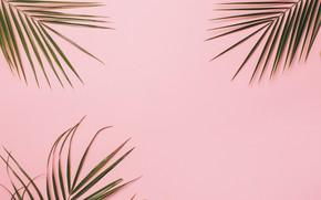 Картинка фон, Текстура, листья пальмы