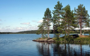 Картинка лес, озеро, сосны