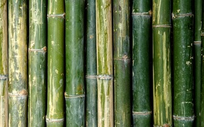 Обои green, Bamboo, pattern