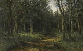 Картинка лес, пейзаж, картина, Иван Иванович Шишкин, Темное Дерево