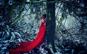 Картинка лес, девушка, снег, дерево, красное платье