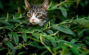 Картинка кот, взгляд, листья, ветки, мордочка, котёнок