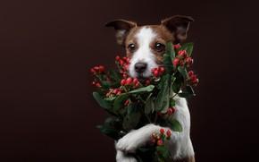 Картинка фон, собака, букет, поздравление