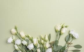 Картинка Цветы, Букет, Фон, Эустома
