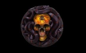 Обои череп, 12 Sins: Envy, Grigory Lebidko, змея
