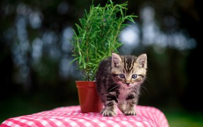 Картинка малыш, цветок, котёнок