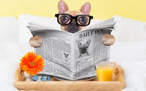 Картинка стакан, собака, юмор, сок, очки, газета, окуляры