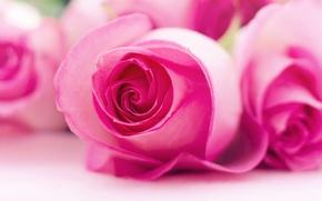 Картинка макро, природа, роза, лепестки, бутон