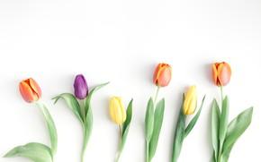 Картинка цветы, flowers, spring, tulips, тюльпаны, wood, colorful, fresh, beautiful