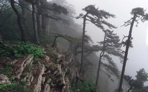 Картинка деревья, горы, туман