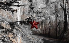 Картинка лес, праздник, звезда