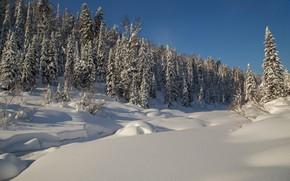 Картинка зима, лес, снег, деревья, ели, сугробы, Россия, тайга, Сибирь, Река Амзас