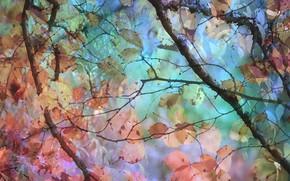 Обои цвет, лес, природа
