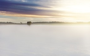 Картинка поле, лес, облака, свет, снег, туман, дерево, рассвет, утро