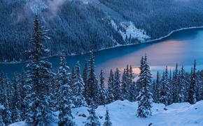 Картинка Природа, Зима, Деревья, Снег, Banff National Park, Canada, Peyto Lake