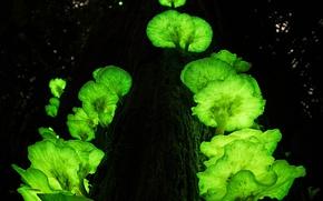 Картинка дерево, грибы, Австралия, призрак, ствол, Квинсленд, Атертон