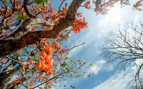 Картинка небо, листья, солнце, цветы, дерево, весна, sunshine, blossom, flowers, tree, spring, sry