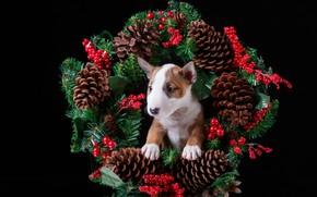 Картинка ягоды, праздник, новый год, щенок, венок, шишки