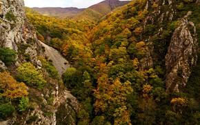 Картинка осень, лес, деревья, горы, камни, скалы, вид сверху