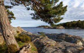 Картинка море, камни, дерево