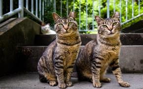 Картинка взгляд, коты, братья