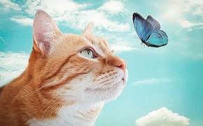 Обои кот, бабочка, рыжий