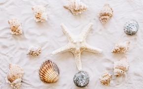 Картинка песок, пляж, звезда, ракушки, summer, beach, sand, marine, starfish, seashells