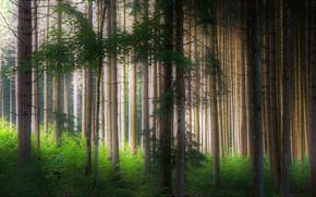 Обои лес, forest, деревья
