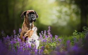 Картинка цветы, природа, две собаки, Tini and Sunny