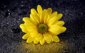 Картинка капли, цветок, отражение, лепестки