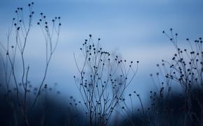 Картинка макро, фон, сухие, ростения