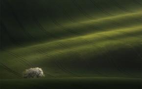 Обои перелив, весна, деревья, природа, ковры, поля, цвет