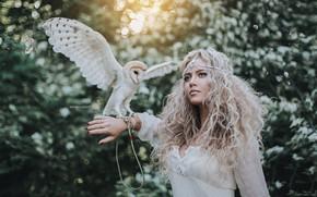 Обои девушка, сова, птица, волосы, локоны, сипуха, Антон Харисов, Лерочка Половинчик