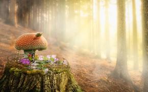 Картинка пенек, гриб, лес, домик