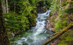 Картинка лес, река, штат Вашингтон, Washington State, Denny Creek