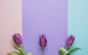 Картинка цветы, тюльпаны, fresh, flowers, romantic, tulips, spring, purple