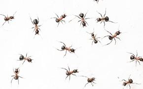 Картинка природа, фон, муравьи