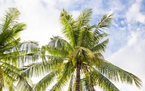 Картинка пляж, лето, небо, пальмы, summer, beach, sky, beautiful, paradise, palms, tropical