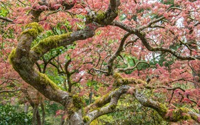 Картинка ветки, природа, дерево