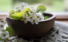 Картинка груша, миска, цветение, цветки груши