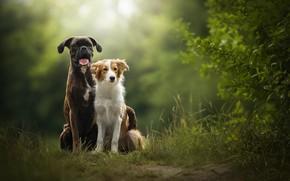 Картинка природа, две собаки, Sunny, Tini