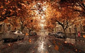 Картинка листья, город, улица, автомобили, Orange Shower