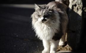 Картинка кошка, фон, шерсть
