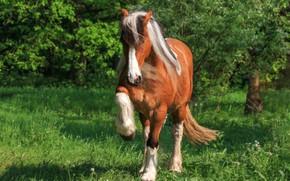 Картинка трава, природа, поза, фон, конь, лошадь, копыта, гнедой